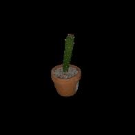 Planta Cactus Mini