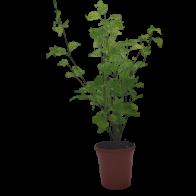 Planta Bella y Secora